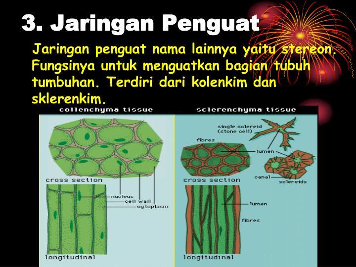 Jaringan penguat nama lainnya yaitu stereon. Fungsinya untuk menguatkan bagian tubuh tumbuhan. Terdiri dari kolenkim dan sklerenkim.