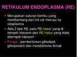 retikulum endoplasma re