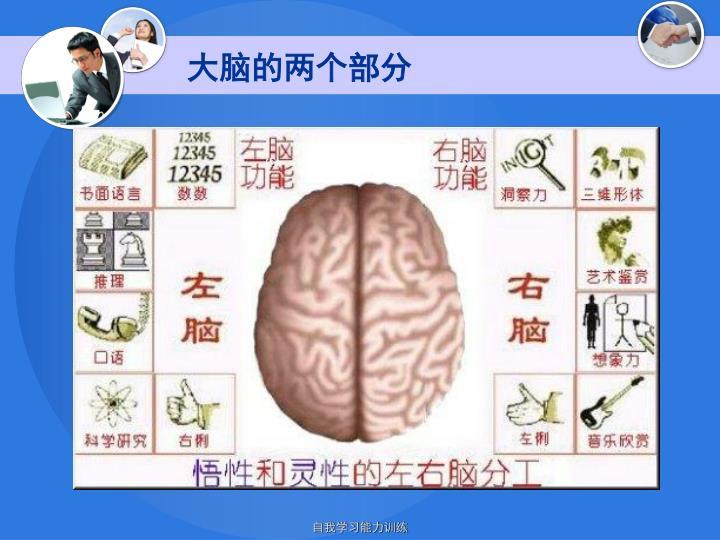大脑的两个部分
