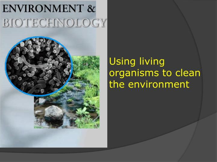 Using living organisms to clean the environment