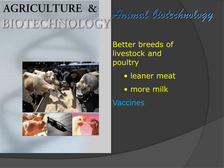 Better breeds of livestock and poultry