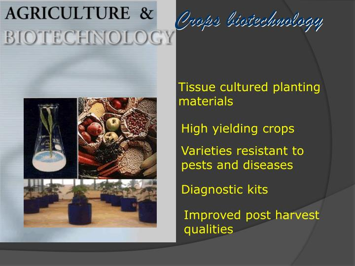 Crops biotechnology