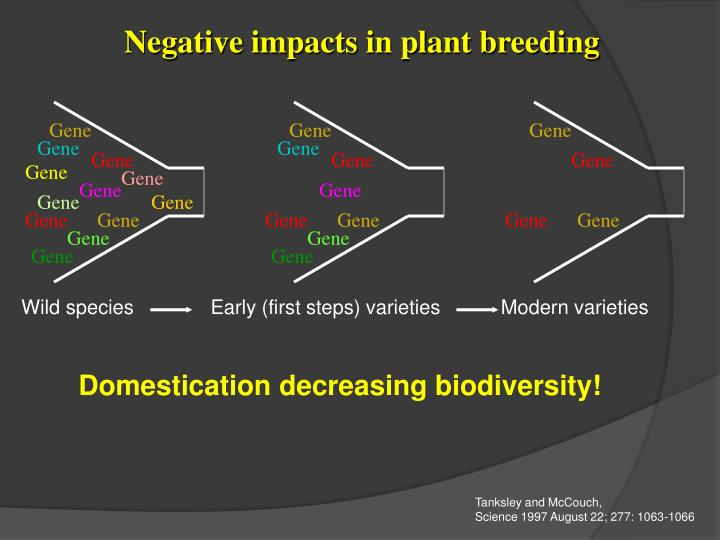 Negative impacts in plant breeding