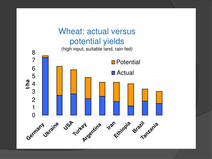 Wheat: actual versus potential yields