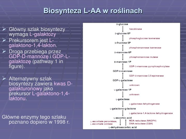 Biosynteza L-AA w roślinach