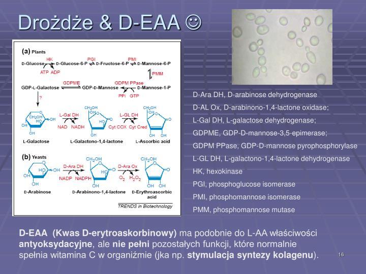 Drożdże & D-EAA