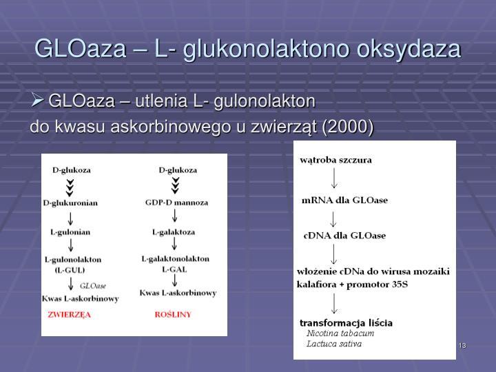 GLOaza – L- glukonolaktono oksydaza