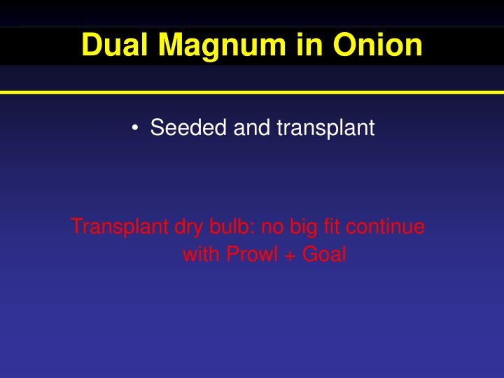 Dual Magnum in Onion
