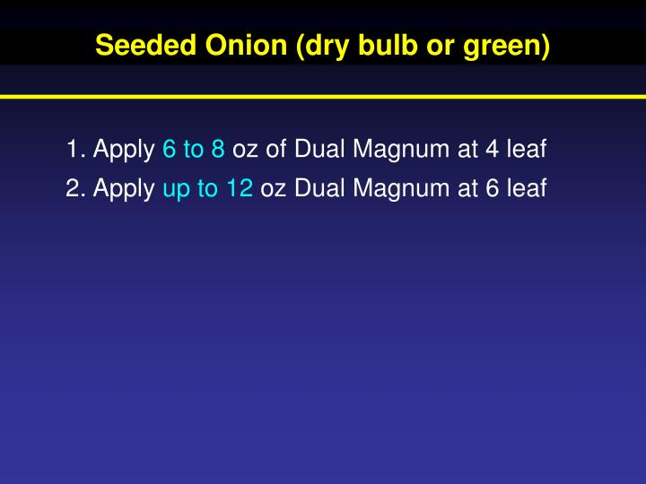 Seeded Onion (dry bulb or green)