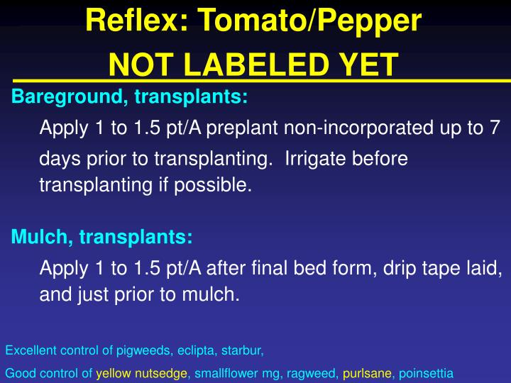 Reflex: Tomato/Pepper