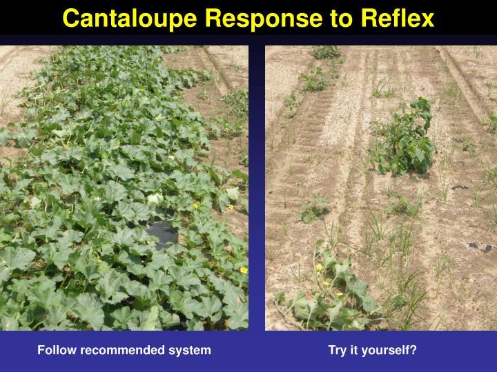 Cantaloupe Response to Reflex