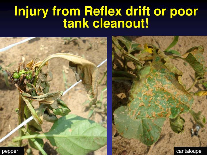 Injury from Reflex drift or poor tank cleanout!