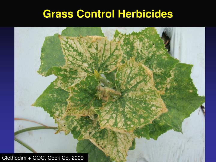 Grass Control Herbicides