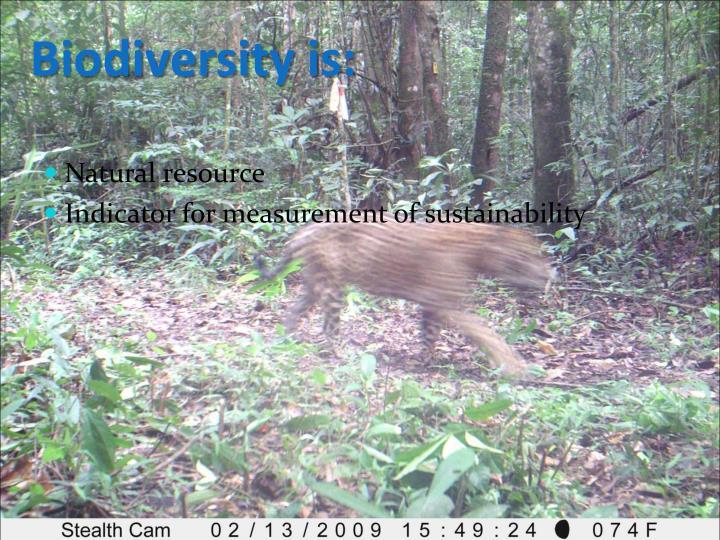 Biodiversity is: