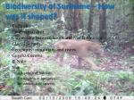 biodiversity of suriname how was it shaped