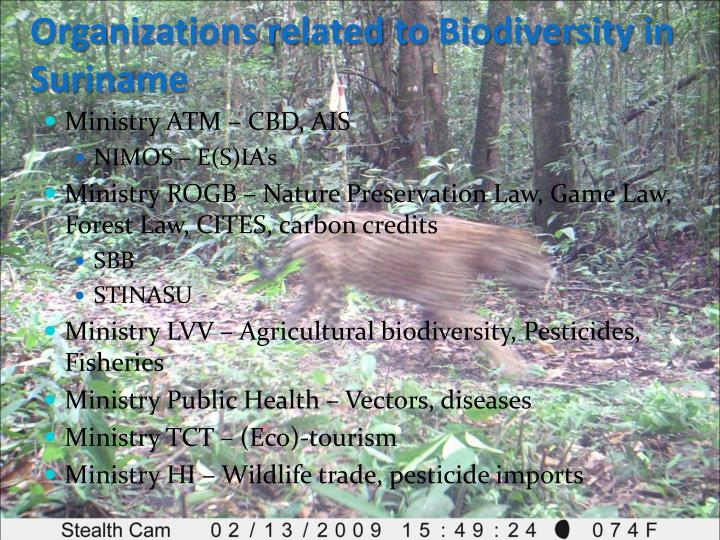 Organizations related to Biodiversity in Suriname