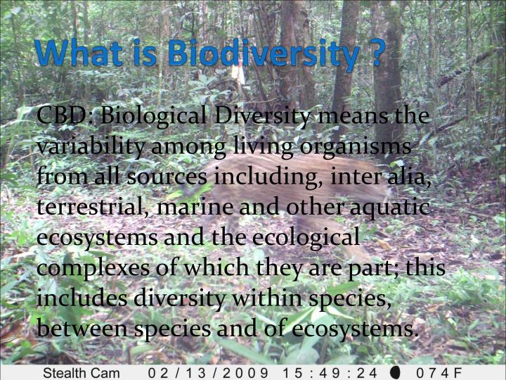 What is Biodiversity ?