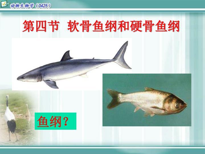 第四节  软骨鱼纲和硬骨鱼纲