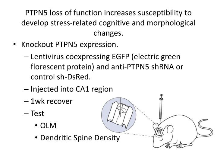 PTPN5 loss of function increases susceptibility to develop stress-related cognitive and morphological changes.