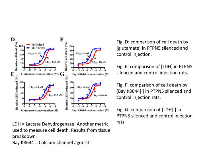 Fig. D: comparison of cell death by [glutamate] in PTPN5 silenced and control injection.