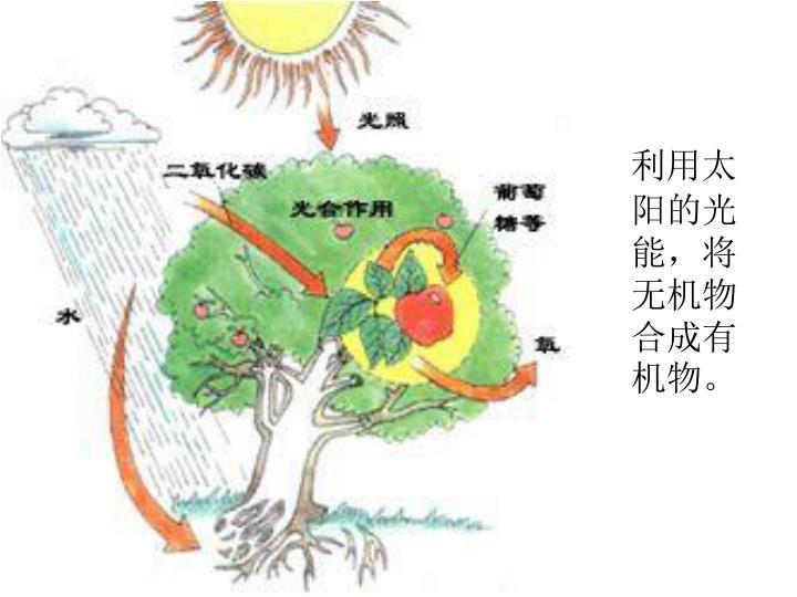 利用太阳的光能,将无机物合成有机物。