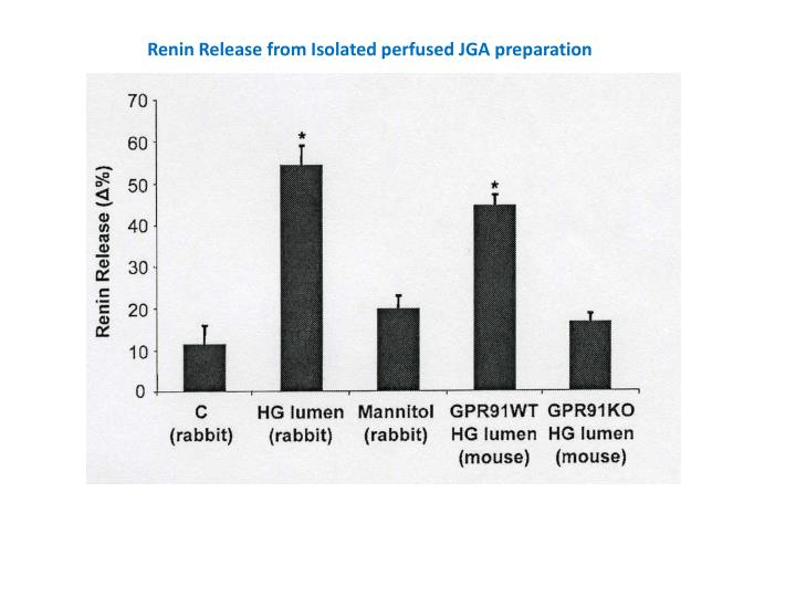 Renin Release from Isolated perfused JGA preparation
