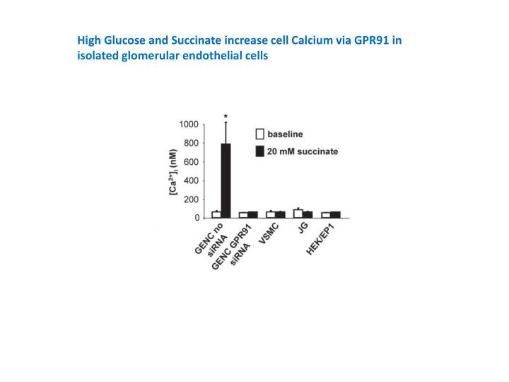 High Glucose and Succinate increase cell Calcium via GPR91 in isolated glomerular endothelial cells
