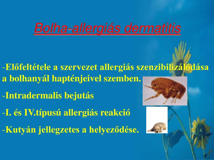Bolha-allergiás dermatitis