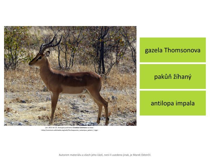 gazela Thomsonova