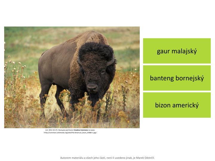 gaur malajský