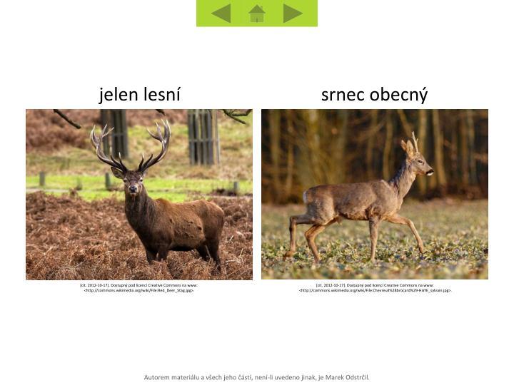 jelen lesní