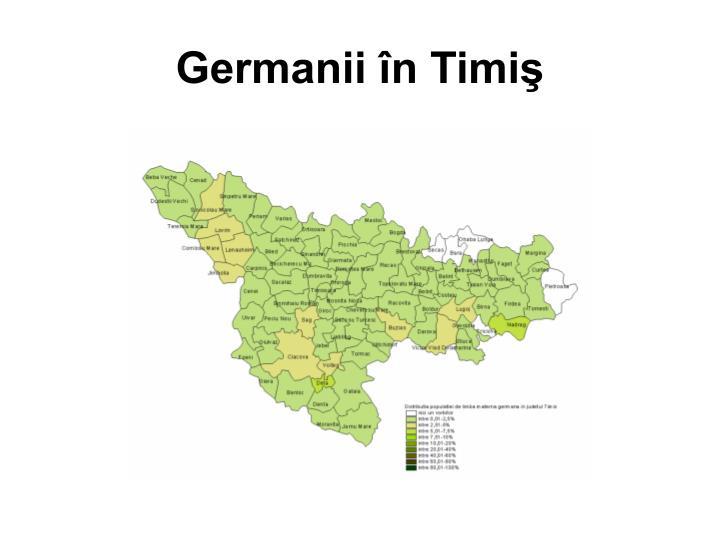Germanii în Timiş