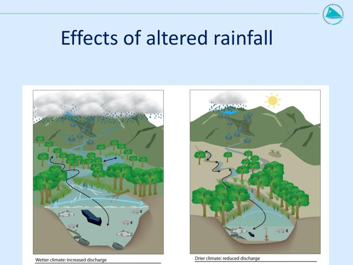 Effects of altered rainfall
