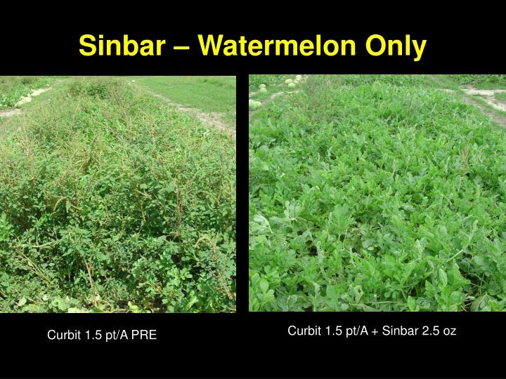 Sinbar – Watermelon Only