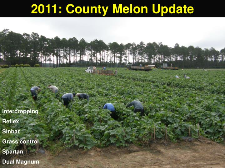 2011: County Melon Update