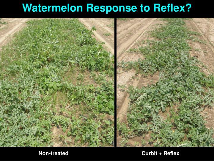 Watermelon Response to Reflex?