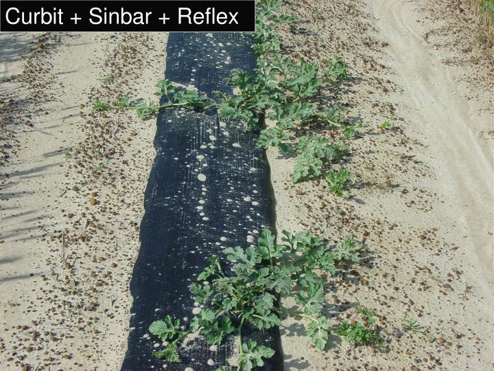 Curbit + Sinbar + Reflex