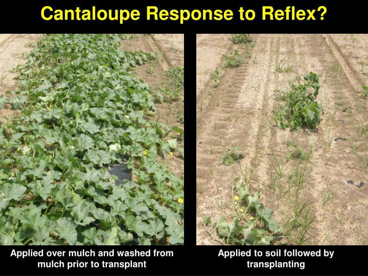 Cantaloupe Response to Reflex?
