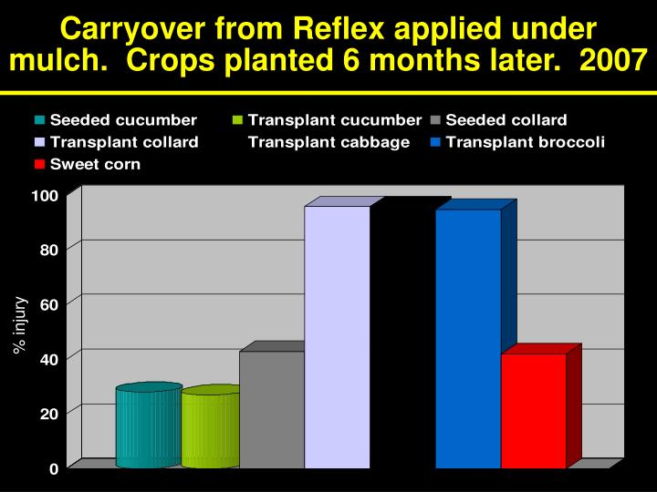 Carryover from Reflex applied under mulch.  Crops planted 6 months later.  2007