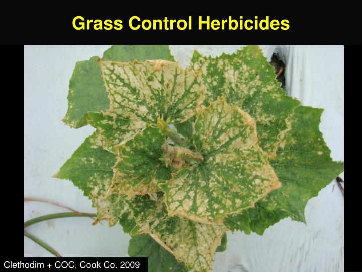 Grass Control Herbicides