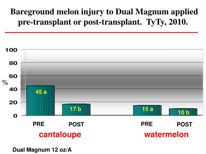 Bareground melon injury to Dual Magnum applied pre-transplant or post-transplant.  TyTy, 2010.