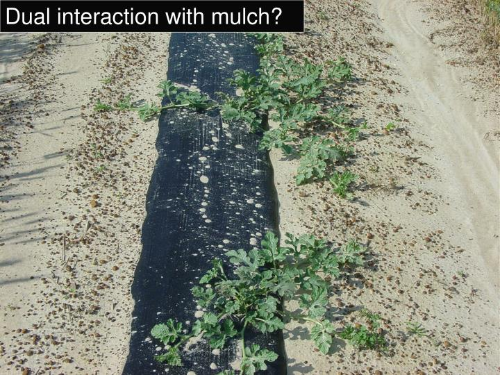 Dual interaction with mulch?