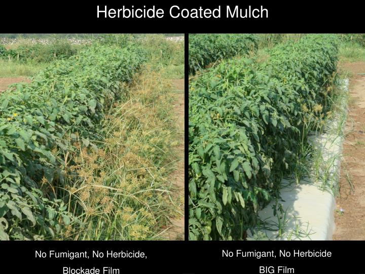 Herbicide Coated Mulch