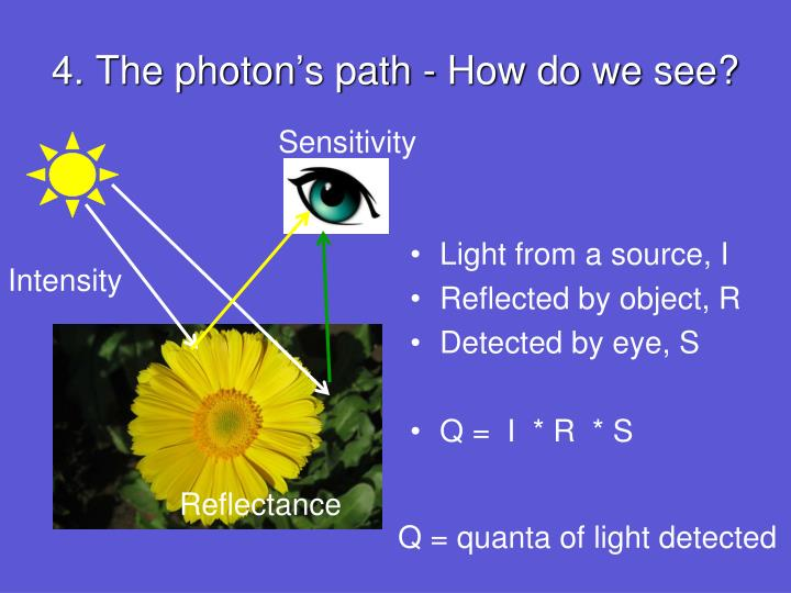 4. The photon