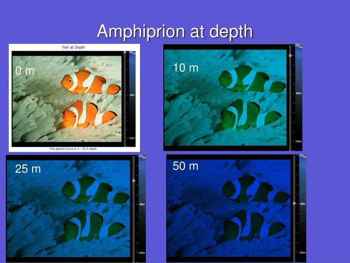 Amphiprion at depth