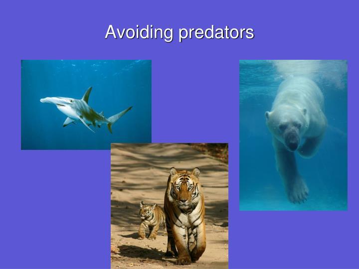 Avoiding predators