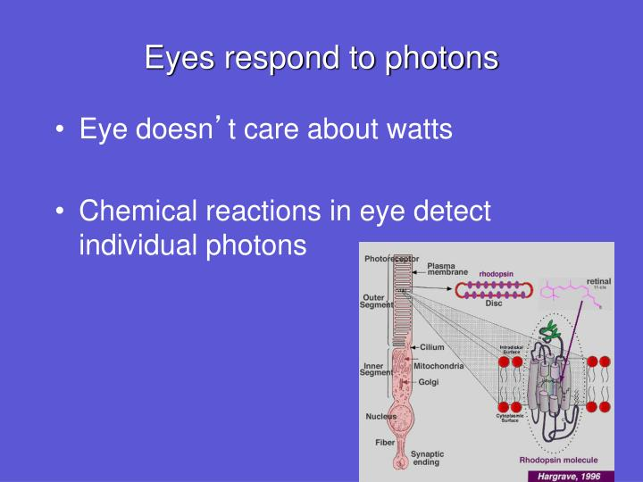 Eyes respond to photons