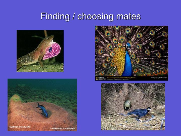 Finding / choosing mates
