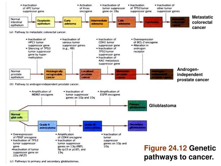 Metastatic colorectal cancer