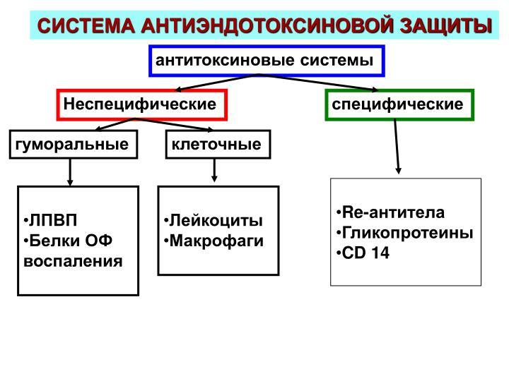 СИСТЕМА АНТИЭНДОТОКСИНОВОЙ ЗАЩИТЫ